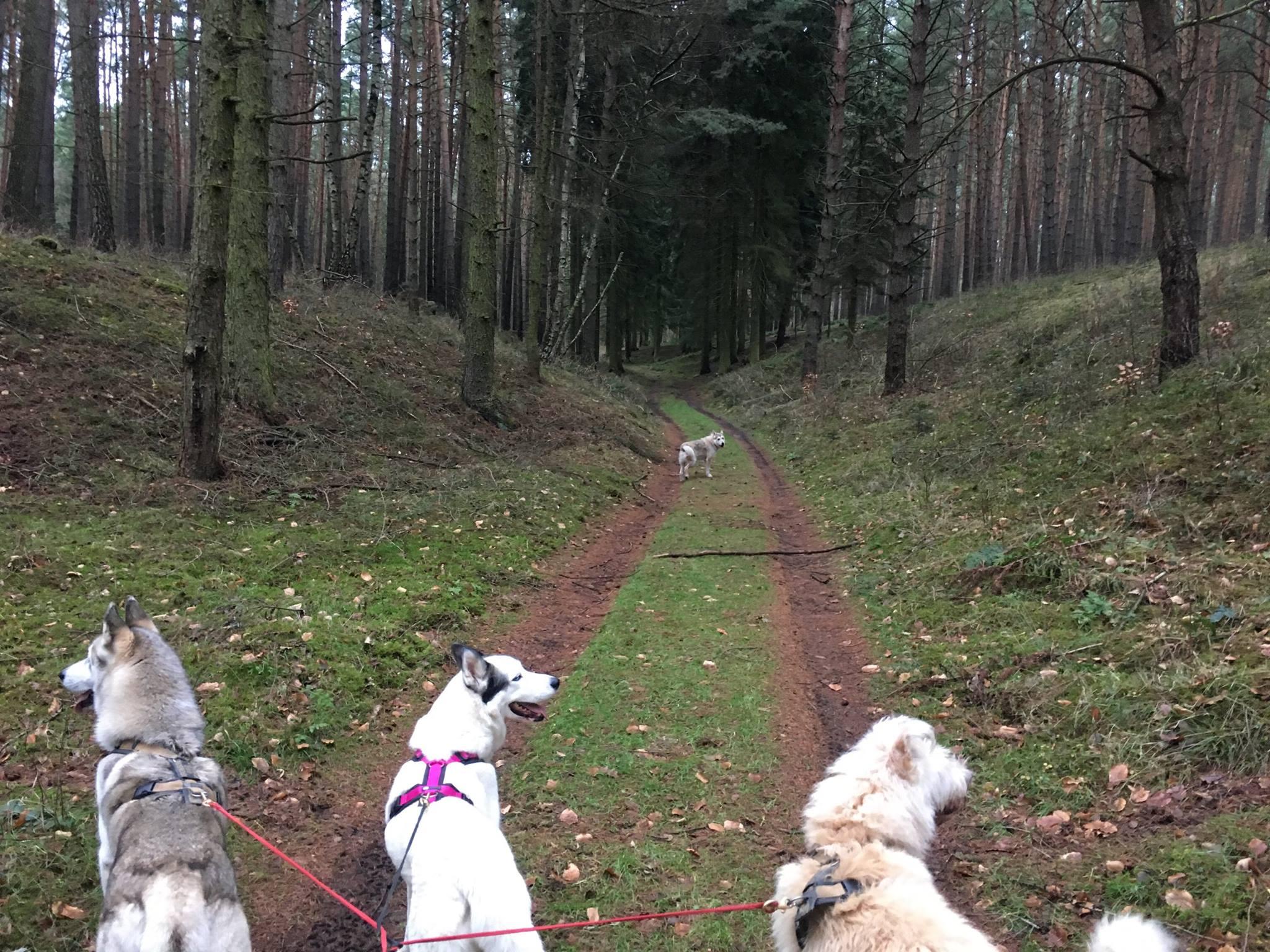 Bergmolchwanderweg_20171223_01