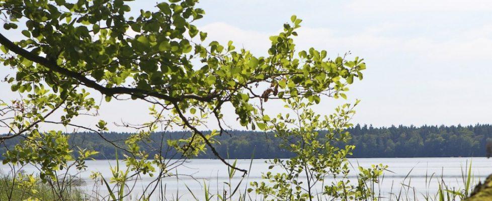 Am Stechlin See